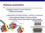 histone acetylation