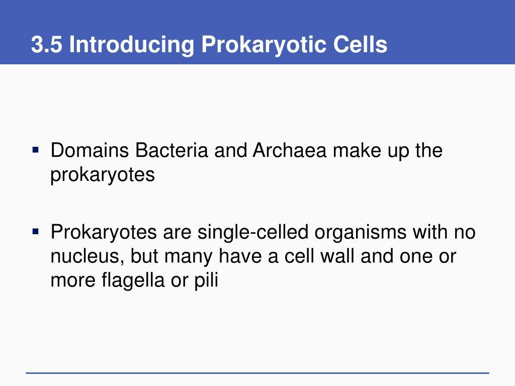 3.5 Introducing Prokaryotic Cells