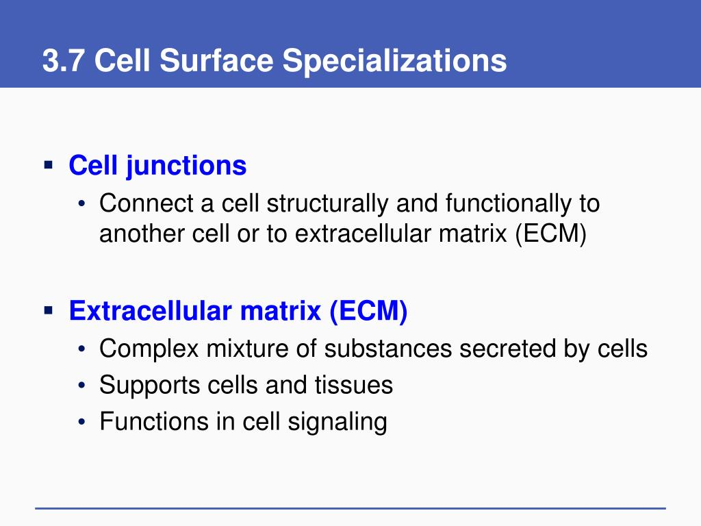 3.7 Cell Surface Specializations