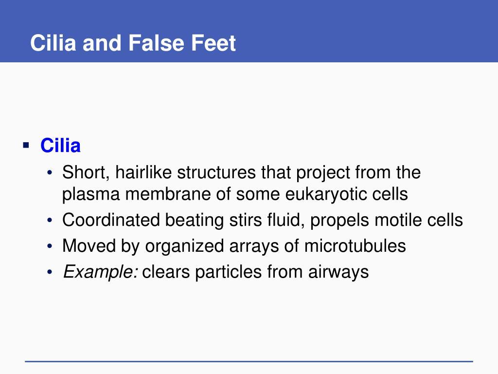 Cilia and False Feet