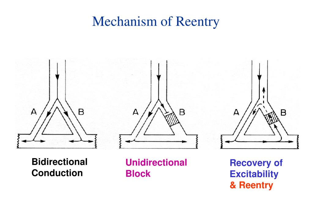 Mechanism of Reentry