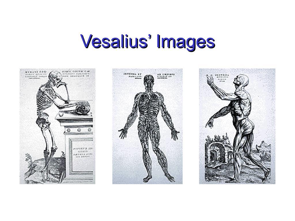Vesalius' Images