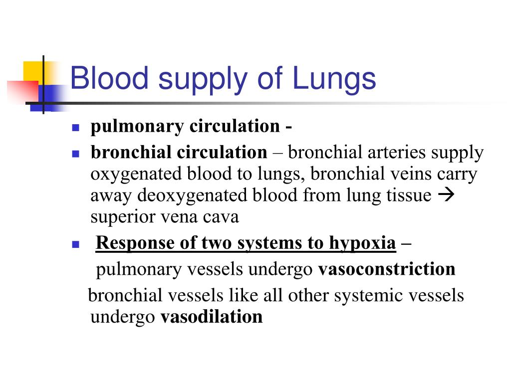 Blood supply of Lungs