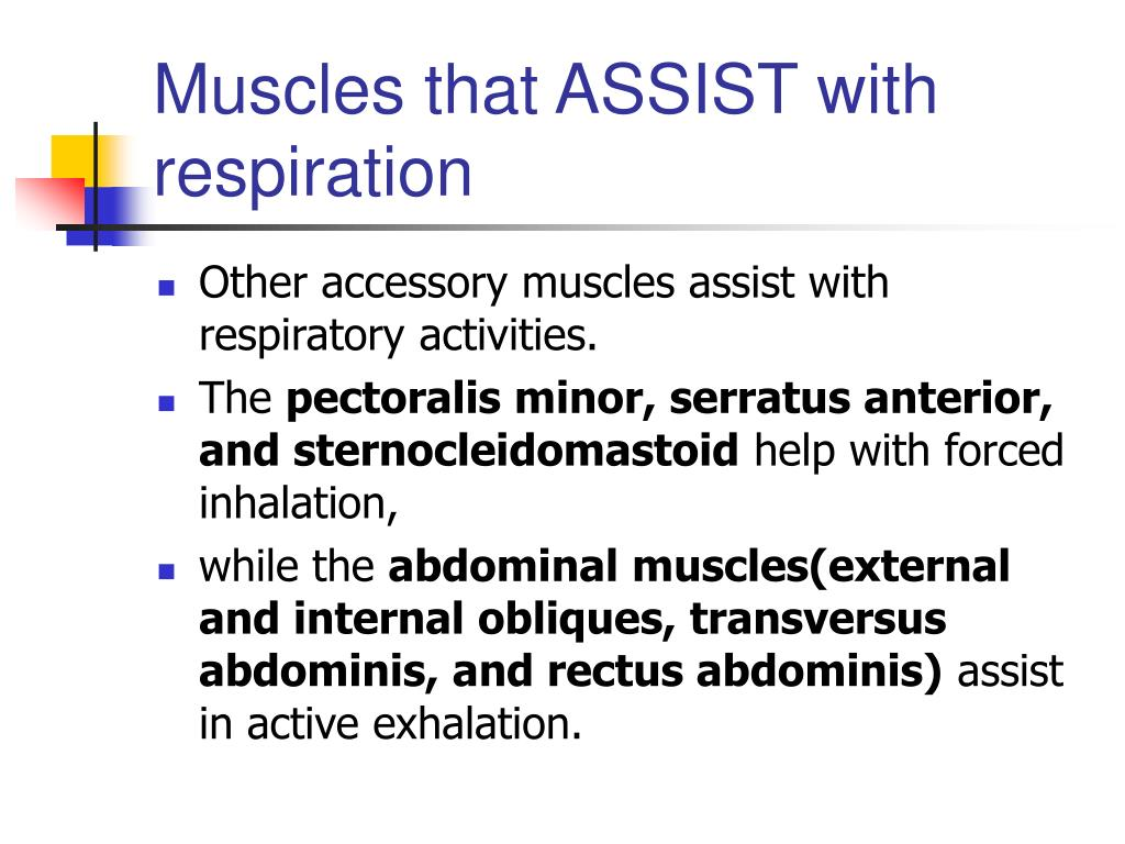 Muscles that ASSIST with respiration