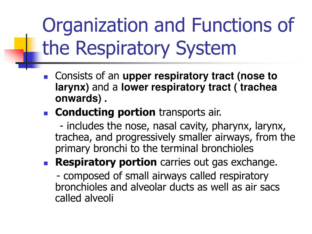 Organization and Functions of the Respiratory System