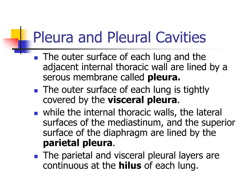 Pleura and Pleural Cavities