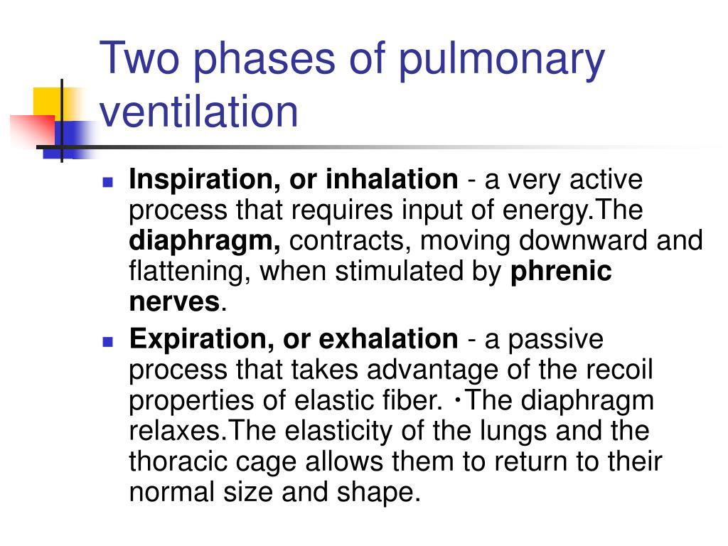Two phases of pulmonary ventilation