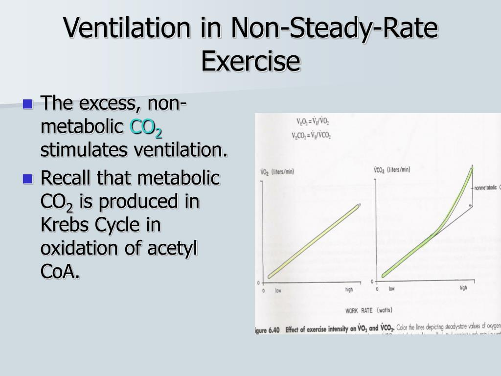 effects exercise pulmonary ventilation rate What happens at the onset of exercise – how the cardio-respiratory system meets  the  what are the long term effects of exercise on these systems  exercise  increases both the breathing rate and the tidal volume, thus.