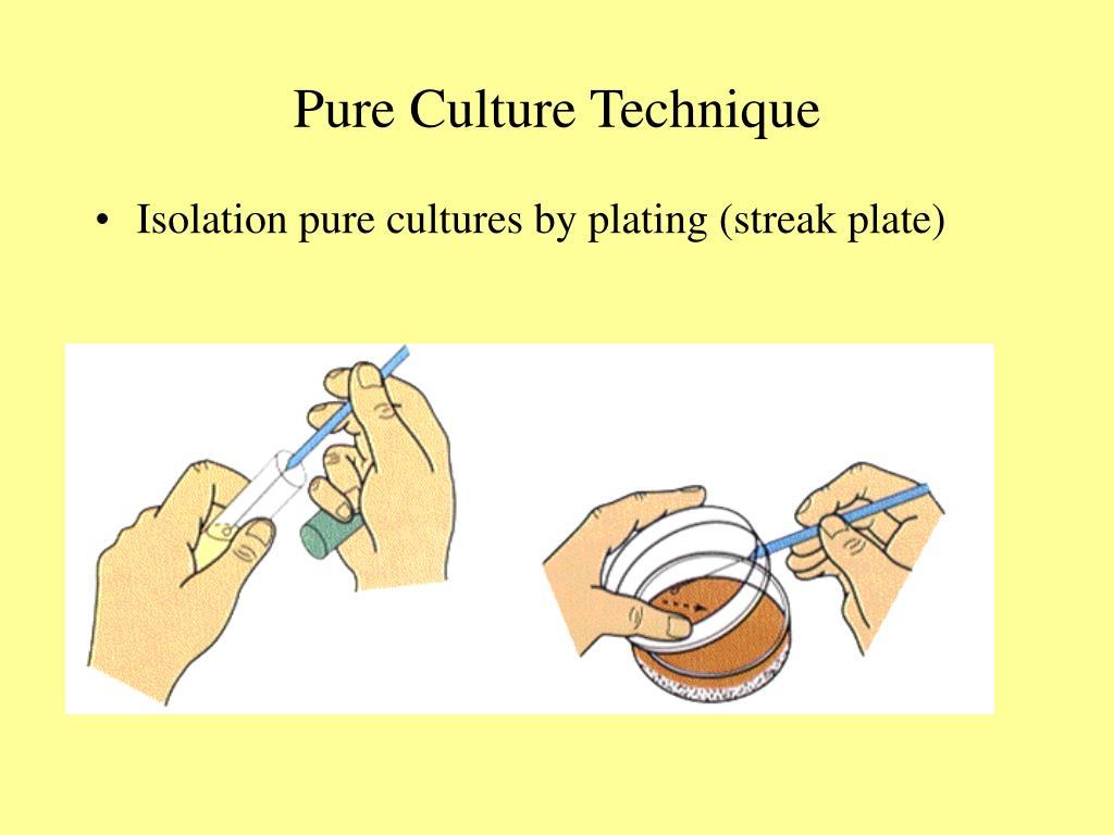 Pure Culture Technique