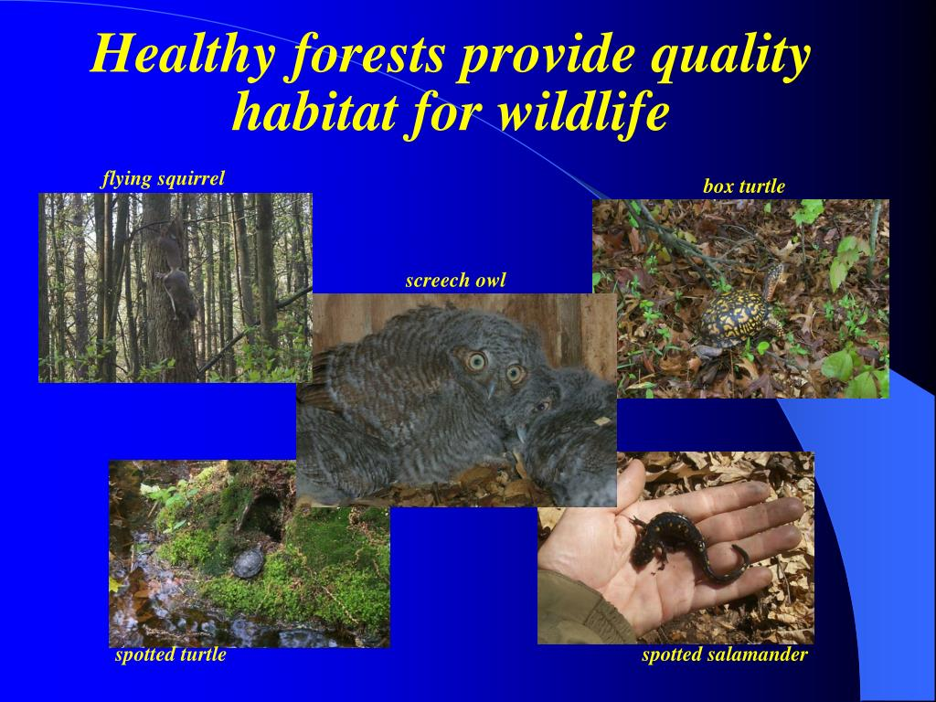 Healthy forests provide quality habitat for wildlife