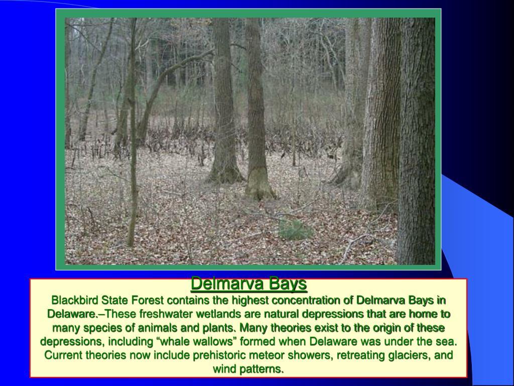 Delmarva Bays