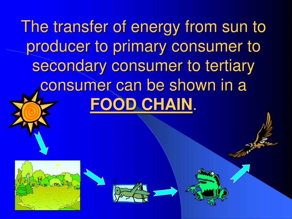 The transfer of energy from sun to producer to primary consumer to secondary consumer to tertiary consumer can be shown in a