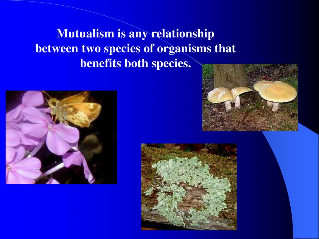 Mutualism is any relationship between two species of organisms that benefits both species.