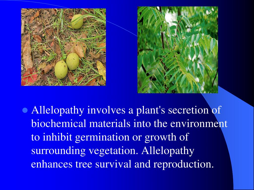 Allelopathy involves a plant's secretion of biochemical materials into the environment to inhibit germination or growth of surrounding vegetation. Allelopathy enhances tree survival and reproduction.