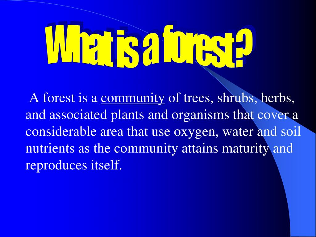 What  is  a  forest ?