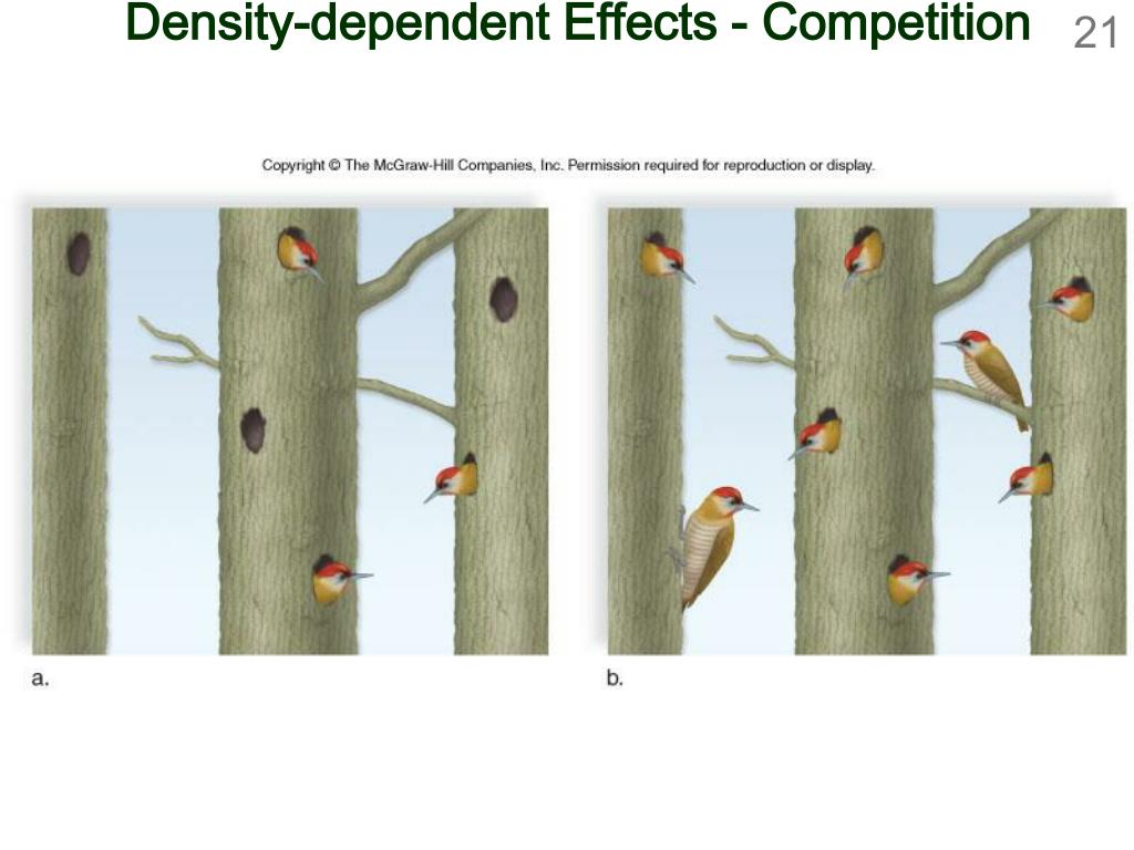 Density-dependent Effects - Competition