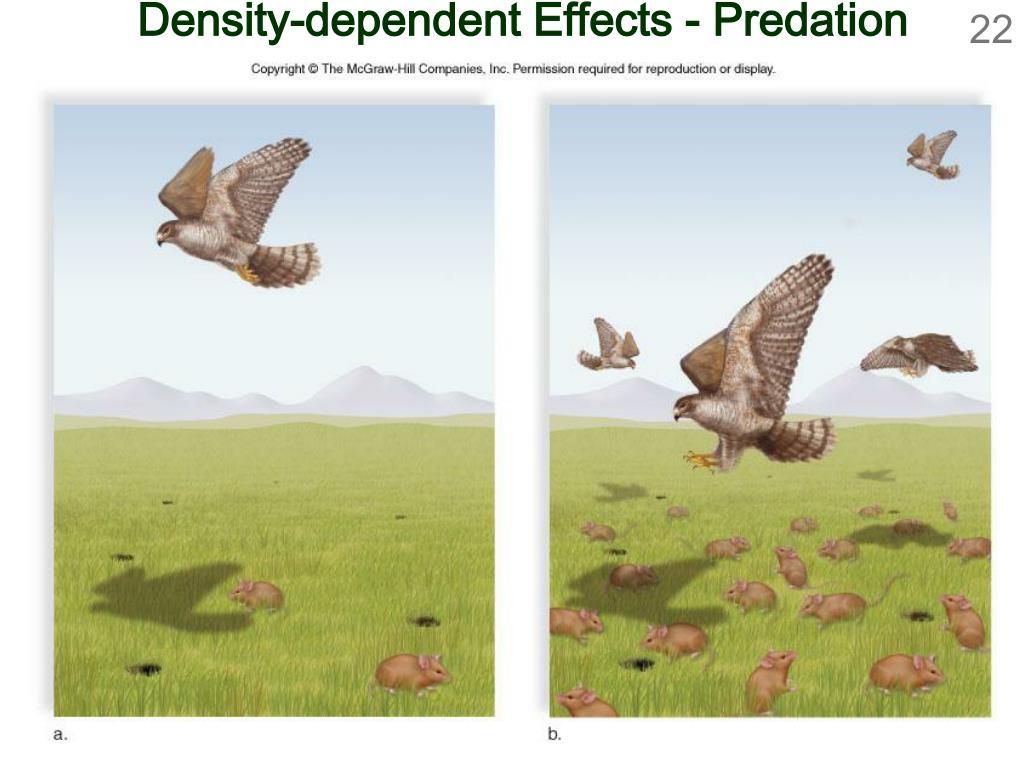 Density-dependent Effects - Predation