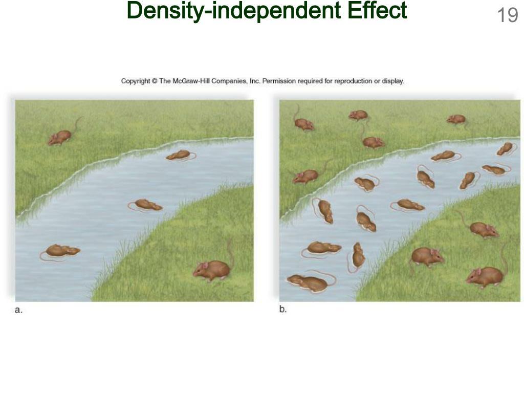 Density-independent Effect