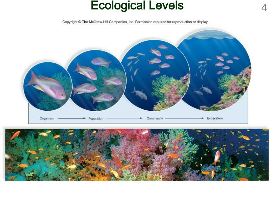 Ecological Levels