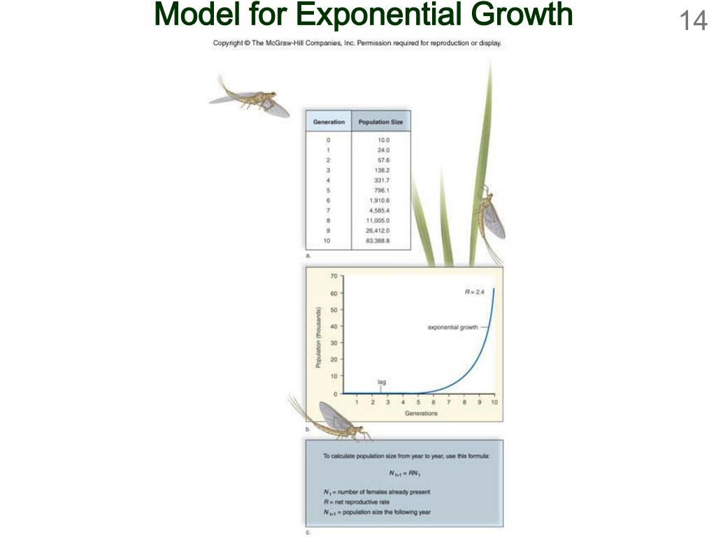 Model for Exponential Growth