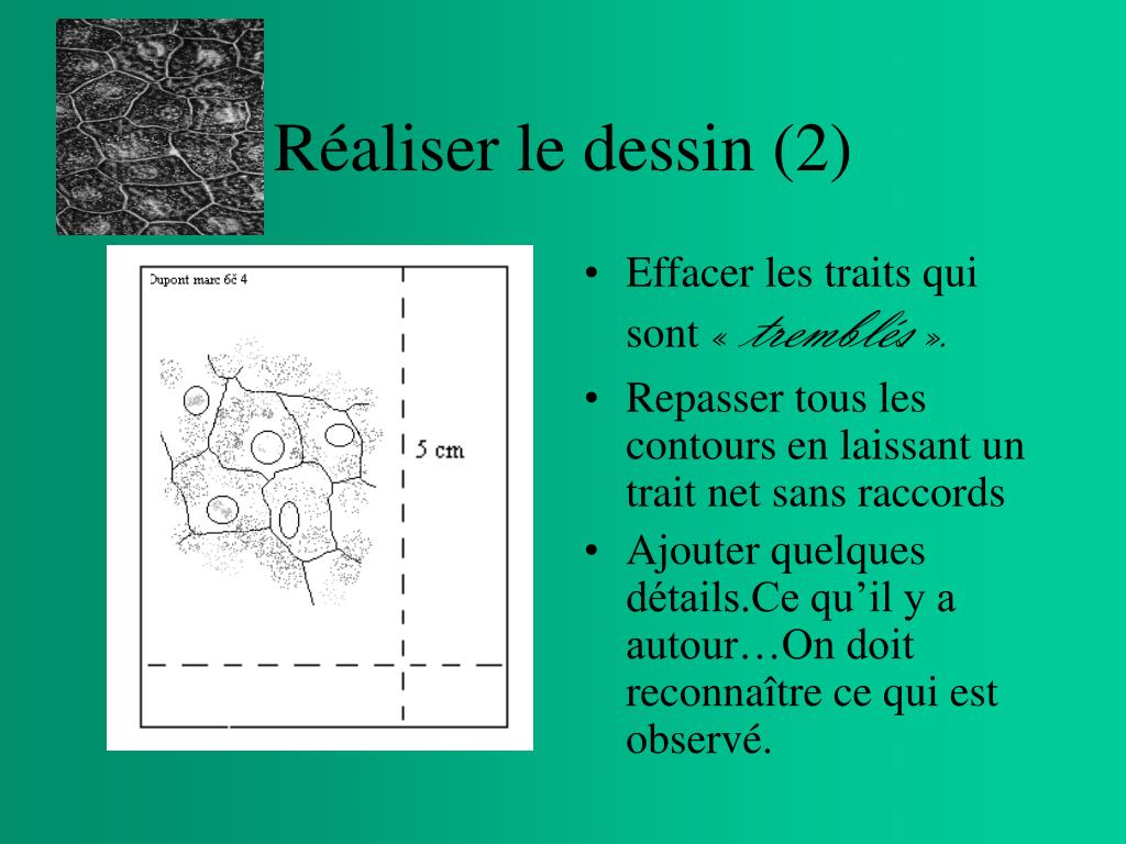Réaliser le dessin (2)