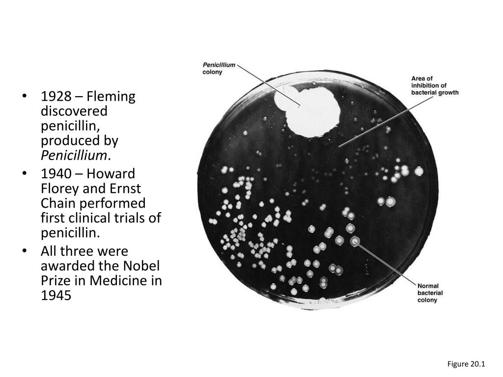 1928 – Fleming discovered penicillin,