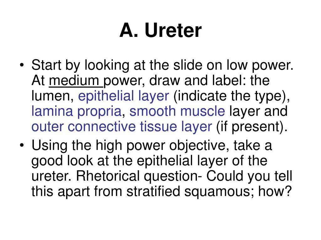 A. Ureter