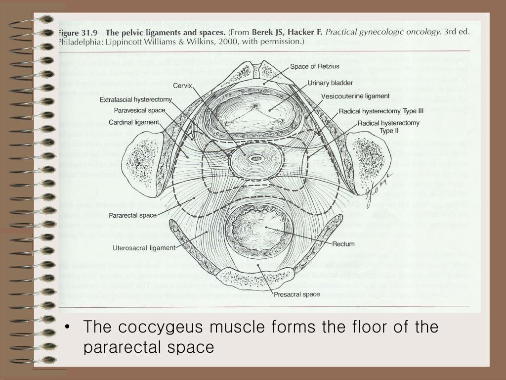 The coccygeus muscle forms the floor of the pararectal space