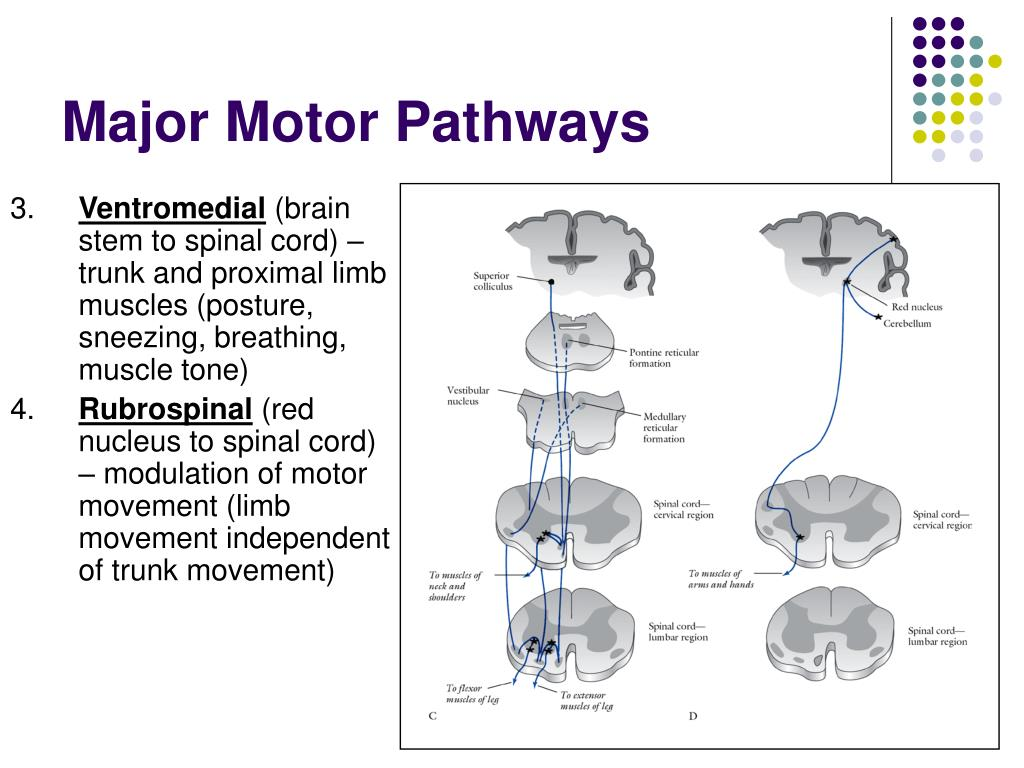 Major Motor Pathways