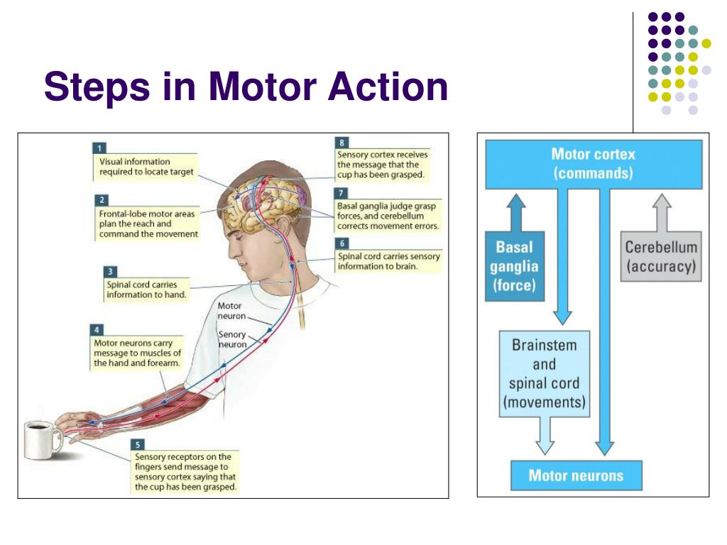 Steps in Motor Action