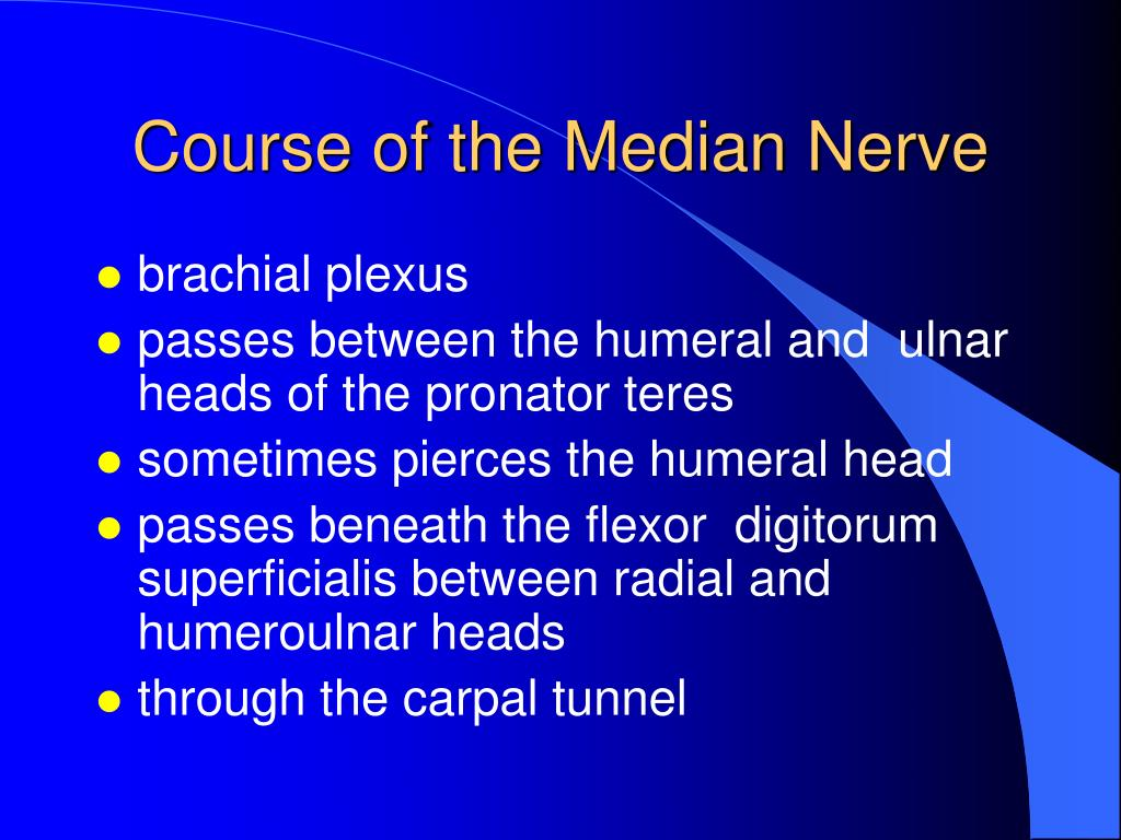Course of the Median Nerve