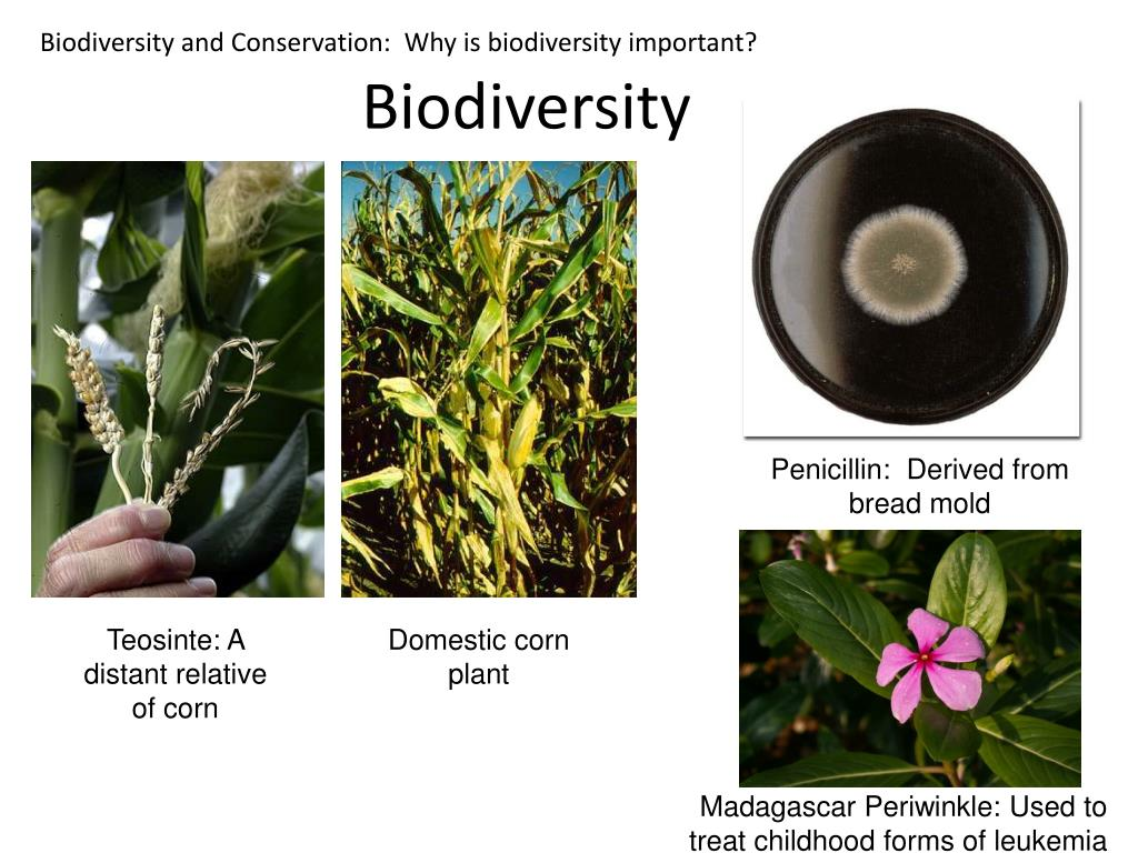 Biodiversity and Conservation:  Why is biodiversity important?