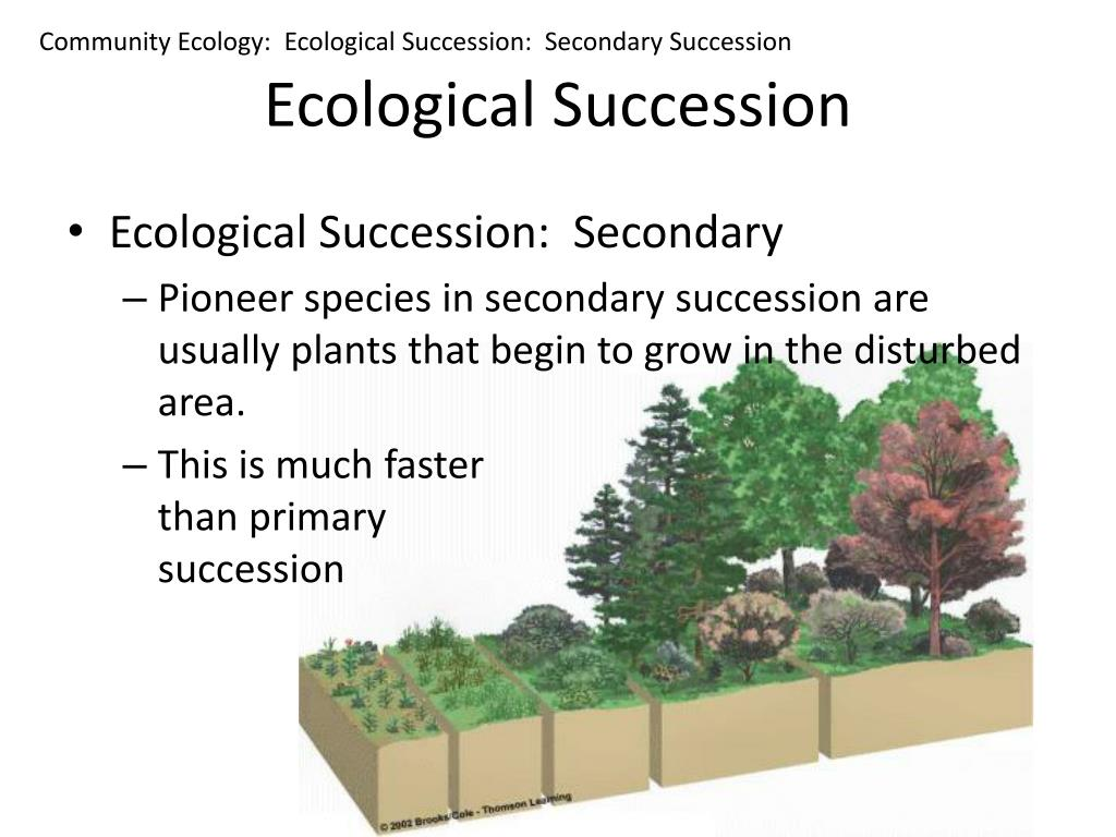 Community Ecology:  Ecological Succession:  Secondary Succession