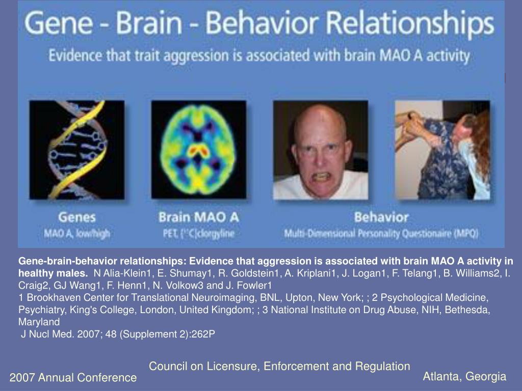 Gene-brain-behavior relationships: Evidence that aggression is associated with brain MAO A activity in healthy males.