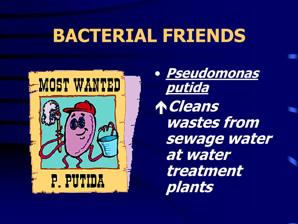 BACTERIAL FRIENDS