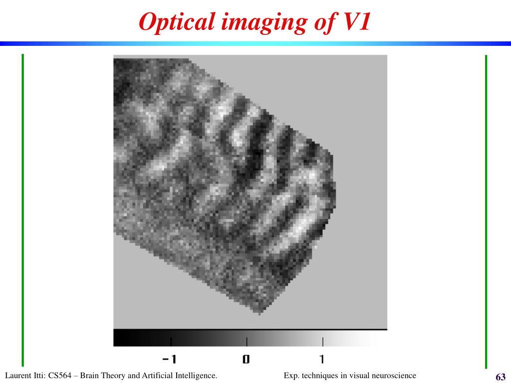 Optical imaging of V1