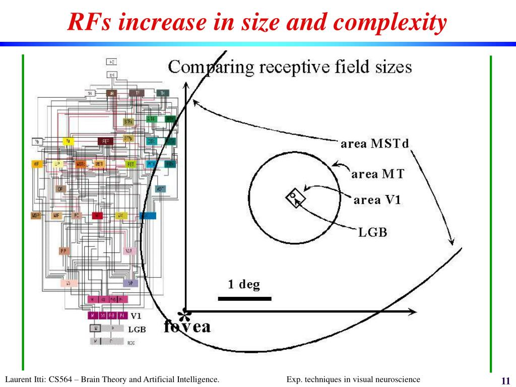 RFs increase in size and complexity