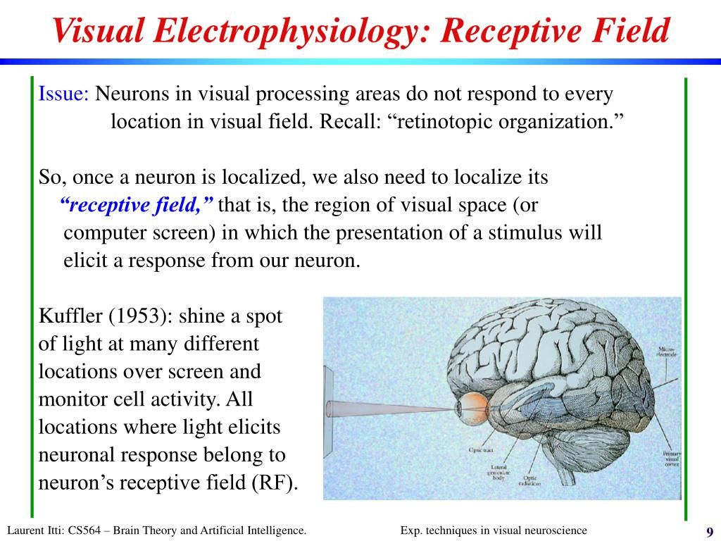 Visual Electrophysiology: Receptive Field