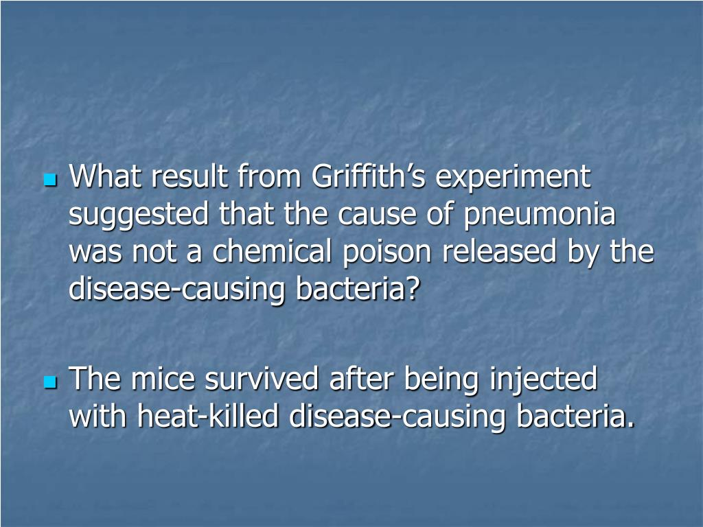 What result from Griffith's experiment suggested that the cause of pneumonia was not a chemical poison released by the disease-causing bacteria?