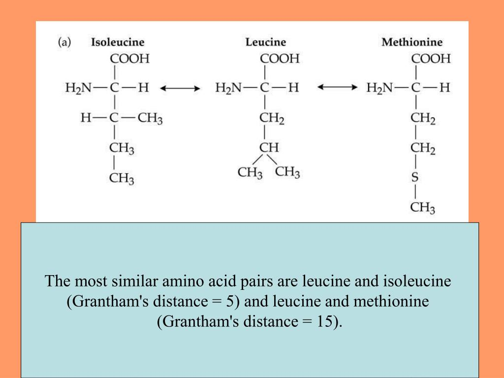 The most similar amino acid pairs are leucine and isoleucine
