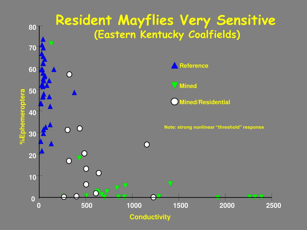 Resident Mayflies Very Sensitive