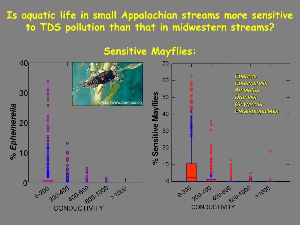 Is aquatic life in small Appalachian streams more sensitive to TDS pollution than that in midwestern streams?