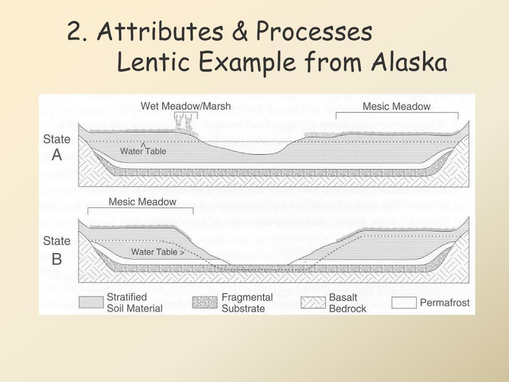2. Attributes & Processes