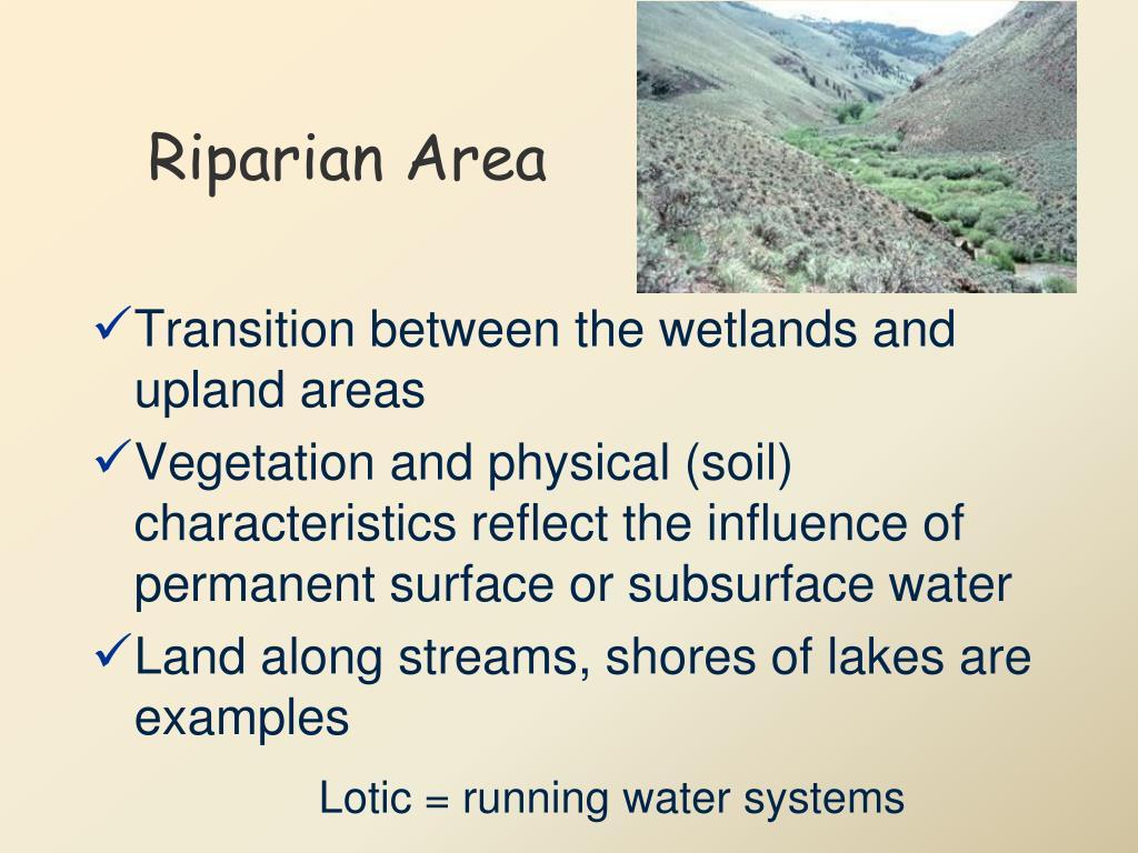 Riparian Area