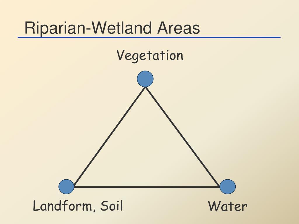Riparian-Wetland Areas