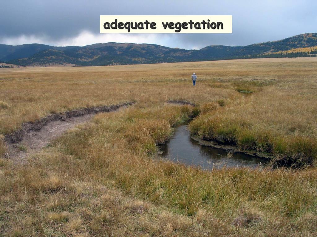 adequate vegetation