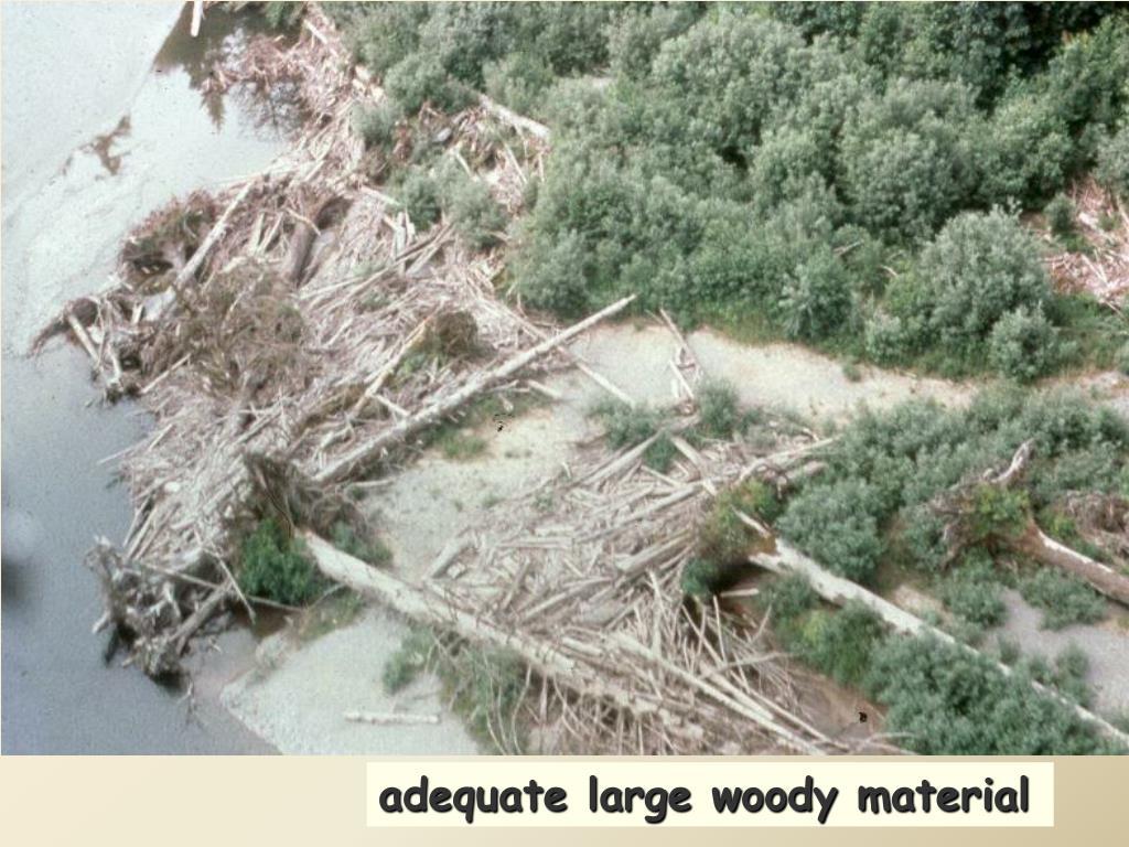 adequate large woody material
