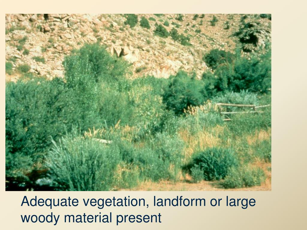 Adequate vegetation, landform or large woody material present