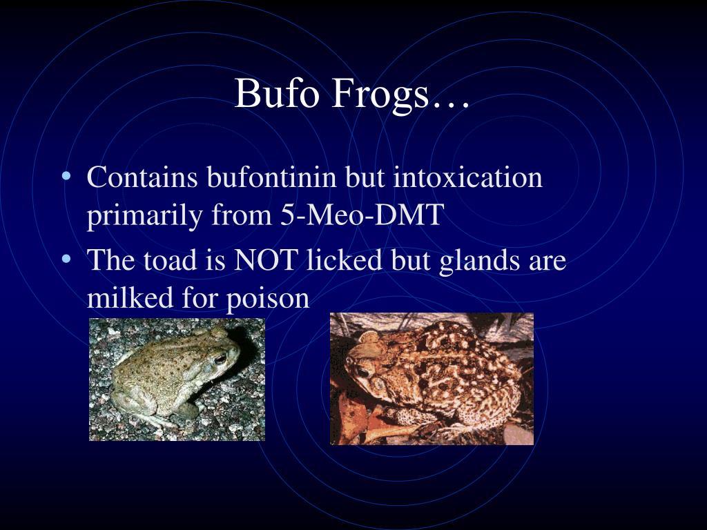 Bufo Frogs…