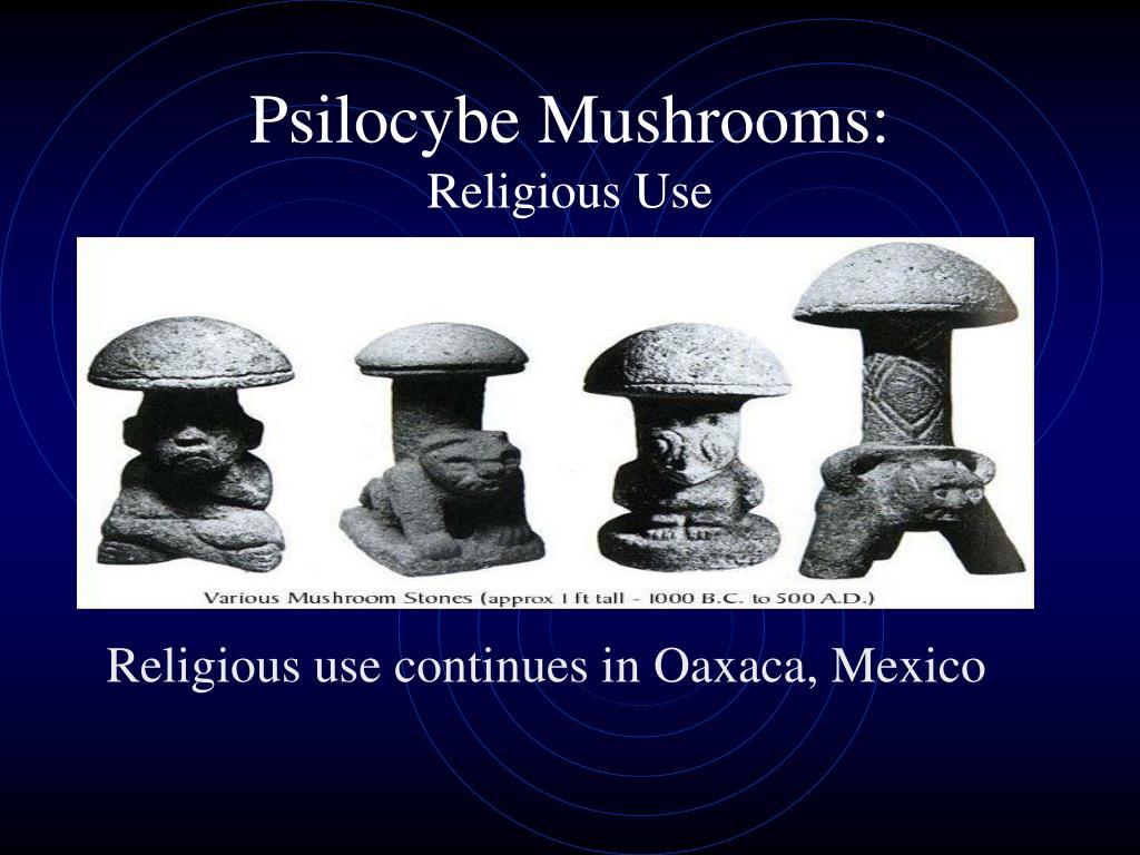 Psilocybe Mushrooms:
